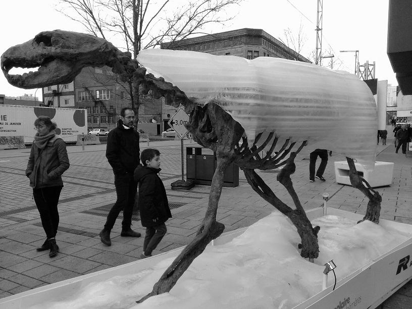 Montréal- Ours polaire sur glaces éphémères 3